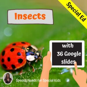 Insect Unit for Special Education with digital activities | Distance learning