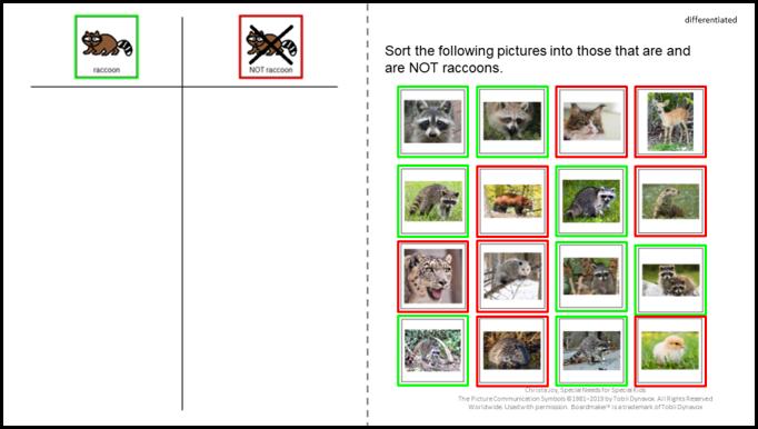 Raccoon digital sorting activity